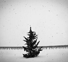 Oh Christmas Tree by Dylan Hamm