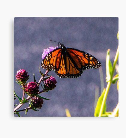 Painterly Flutterbye Canvas Print