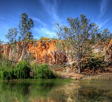 River Willows - The River Murray, Above Renmark, South Australia by Mark Richards