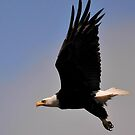 PACIFIC NW AMERICAN EAGLE by RoseMarie747