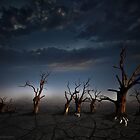 Petrified Oaks IV by Julie-anne Cooke Photography
