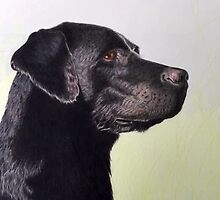 Black Lab by Jo Hawkins