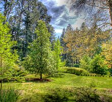 "Treescape - ""Wairoa"", Private Gardens, Stirling, Adelaide Hills by Mark Richards"