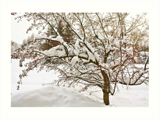Winter ,, no Wonderland Either! by Linda Bianic