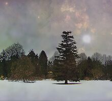 Can you feel the trees? by Judi Taylor
