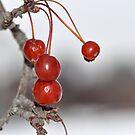 Hi Ho Cherry-O by MaryLynn