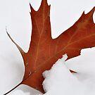 Fire 'n Ice by MaryLynn