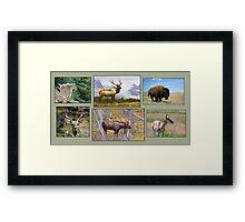Wild Kingdom Framed Print