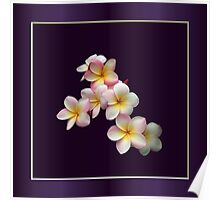 Portrait of Plumeria Blossoms with Frame Poster