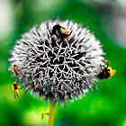 White Spiky Bee Flower by pepemczolz