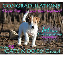 Cats and Dogs Challenge Banner Photographic Print