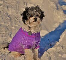 Jazzie in the deep snow by Nancy Rohrig