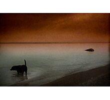Rock Hound Photographic Print