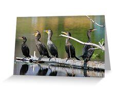 Singing cormorants! Greeting Card