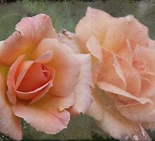 Apricot Roses by julie anne  grattan