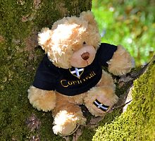Arthurs up a tree,,, by lynn carter