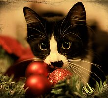 My Cat Oreo by charlena