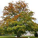 The Olde Oak Tree by AnnDixon