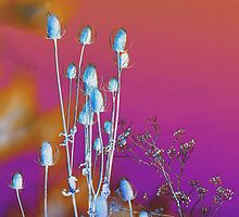 Blue Cattails... Pink Sky by Zolton