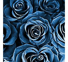 Rose Bouquet in Blue Photographic Print