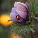Flower and Ladybug by the57man
