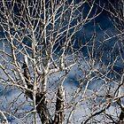 Tree on a Blue Sky by Alexander Standke