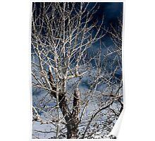 Tree on a Blue Sky Poster