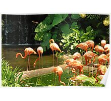 Birds Park 5 Poster
