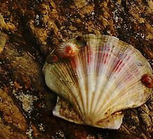 Mother Shell with Baby Shells by Amy Dee