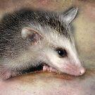Possum Baby by kayzsqrlz