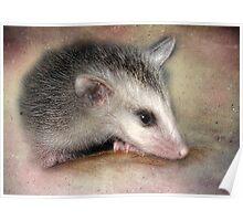 Possum Baby Poster