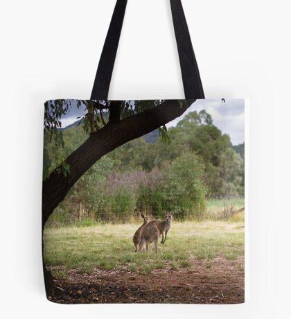 Kangaroos at Warrumbungle National Park NSW  Tote Bag