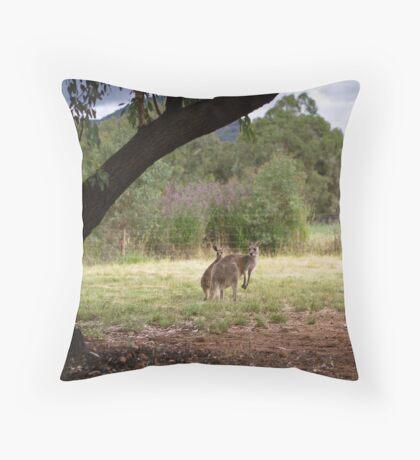 Kangaroos at Warrumbungle National Park NSW  Throw Pillow