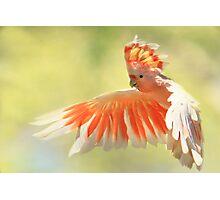 Colours Of Australia Photographic Print