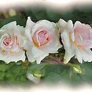 Three pink Roses by julie anne  grattan