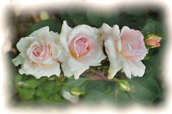 Three pink Roses by julie anne  grattan