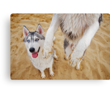 Mia and Diesel Canvas Print