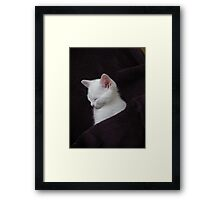 oh so Cute Framed Print