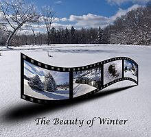 The Beauty of Winter by Kathy Weaver