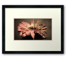 Life of a Flower  Framed Print
