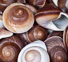 Shells by mfreeburn