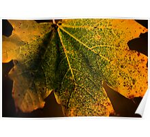 le foglie d'autunno Poster