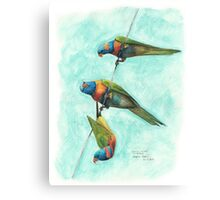 Rainbow Lorikeets on Wire Canvas Print