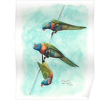 Rainbow Lorikeets on Wire Poster