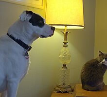 Louie the Dog and Mouse the Cat by TeeMack