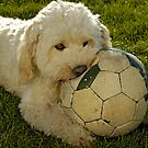 &quot;Teddy&quot; biting into football. by David A. L. Davies