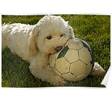 """Teddy"" biting into football. Poster"
