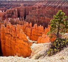 Bryce Canyon After Glow by Stephen Cross Photography