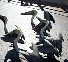 Brown Pelicans waiting for fish by Audrey Krüger