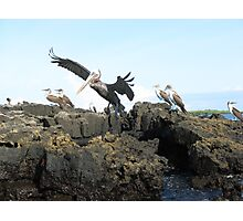 Galapagos Islands Photographic Print